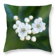 Soft Hawthorn Throw Pillow