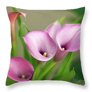 Soft Pink Calla Lilies Throw Pillow