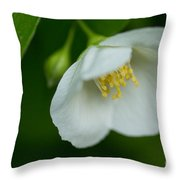 Softly Bowing Throw Pillow