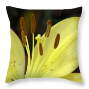Softly Golden Throw Pillow
