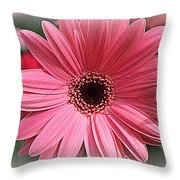 Softly In Pink - Zinnia Throw Pillow