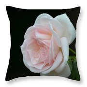 Softly Pink - Rose Throw Pillow