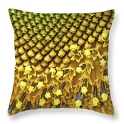 Solar Flair Throw Pillow