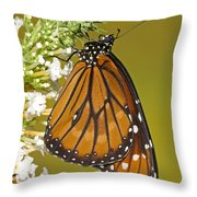 Soldier Butterfly Danaus Eresimus Throw Pillow