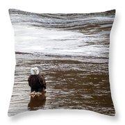 Solitary Eagle Throw Pillow