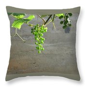 Solitary Grapes Throw Pillow by Deb Martin-Webster