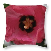 Solo Rose Of Sharon Throw Pillow