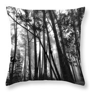 Somber Morning Throw Pillow