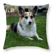 Something Has His Attention Throw Pillow