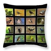 Song Birds Of Canada Collection Throw Pillow