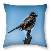 Song Sparrow On Top Of Branch Throw Pillow