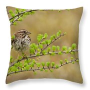 Song Sparrow Pictures 111 Throw Pillow