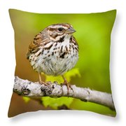 Song Sparrow Pictures 132 Throw Pillow