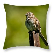 Song Sparrow Pictures 135 Throw Pillow