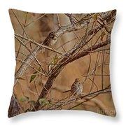 Song Sparrows Throw Pillow