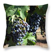 Sonoma Vineyards In The Sonoma California Wine Country 5d24630 Square Throw Pillow