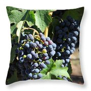 Sonoma Vineyards In The Sonoma California Wine Country 5d24630 Vertical Throw Pillow