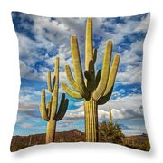 Sonoran Desert Beauty Throw Pillow