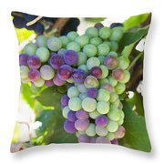 South Africa, Scenes At Constantia Throw Pillow