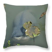 #south American Pacu Throw Pillow