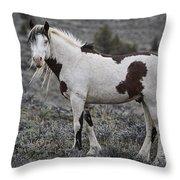 South Steens Wild Stallion Throw Pillow