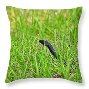 Southern Black Racer Throw Pillow by Al Powell Photography USA