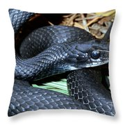 Southern Black Racer Coluber Priapus Throw Pillow