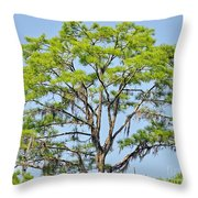 Southern Cypress Throw Pillow