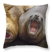 Southern Elephant Seal Pair Calling Throw Pillow by Konrad Wothe