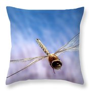 Southern Hawker Dragonfly  Throw Pillow