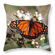 Southern Monarch Butterfly Throw Pillow