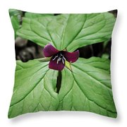 Southern Red Trillium Throw Pillow