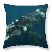 Southern Right Whale Calf Valdes Throw Pillow