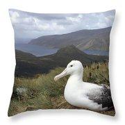 Southern Royal Albatross On Nest Throw Pillow