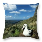 Southern Royal Albatross Throw Pillow