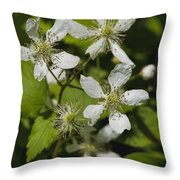 Southern Sawtooth Highbush Blackberry Blossoms - Rubus Argutus Throw Pillow