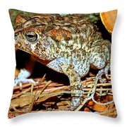 Southern Toad Bufo Terrestris Throw Pillow