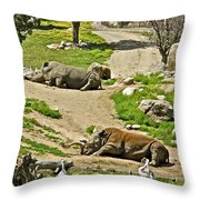 Southern White Rhinoceros In San Diego Zoo Safari Park In Escondido-california Throw Pillow