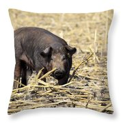 Sow In The Field Throw Pillow
