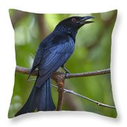 Spangled Drongo Calling Queensland Throw Pillow