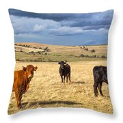 Spanish Bulls Throw Pillow
