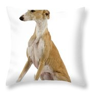 Spanish Galgo Throw Pillow