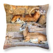 Spanish Ibex Throw Pillow