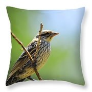 Sparrow On A Branch Throw Pillow