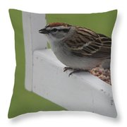 Sparrow On Feeder Throw Pillow