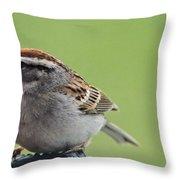 Sparrow Snack Throw Pillow