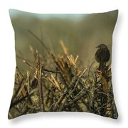 Sparrow Watch  Throw Pillow