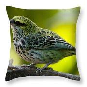Speckled Tanager - Tangara Guttata Throw Pillow