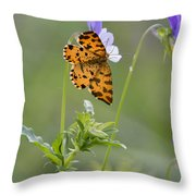 Speckled Yellow Moth On Pansy Wild Flower Throw Pillow
