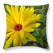 Speckless Yellow African Daisy Throw Pillow